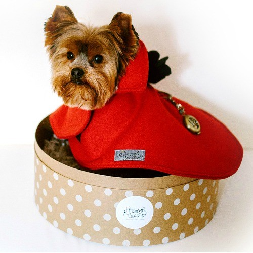 dog fashion. stylish red cashmere cape for dogs