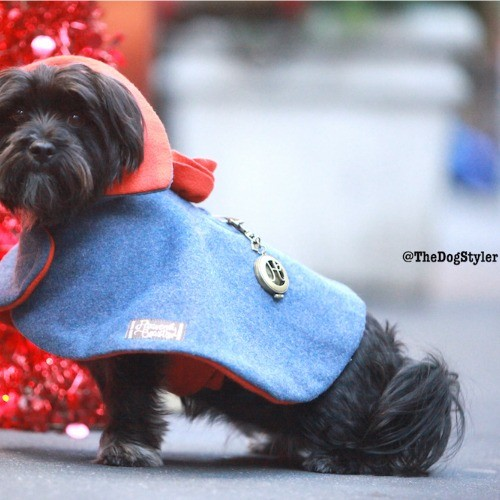 dog fashion. Stylish blue and orange wool cape for dogs