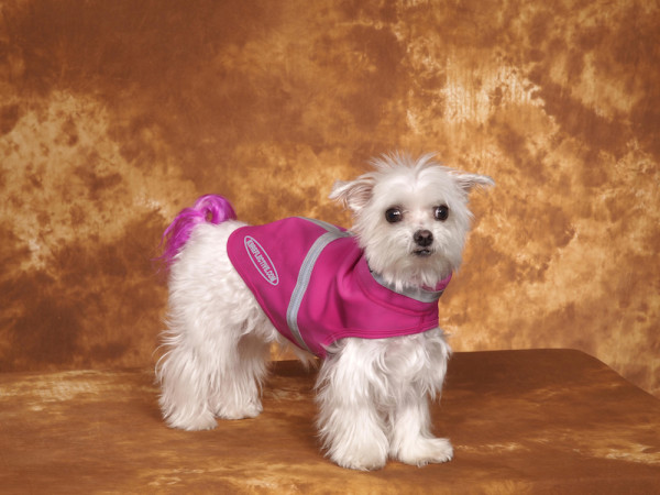 Dogs with style and their parents would love these products. Beautiful raspberry dog coat you can see in the dark.