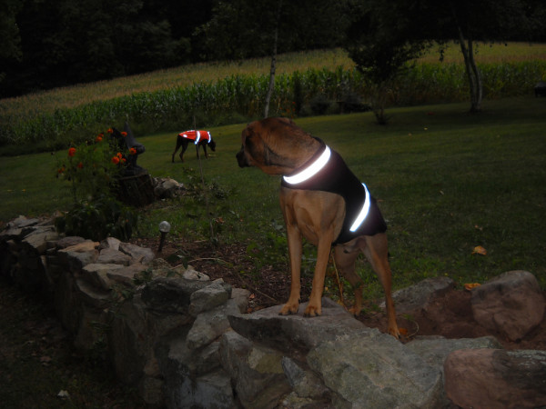 Dogs with style and their parents would love these products. Beautiful dog coats you can see in the dark.