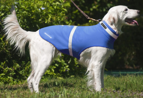 Stylish, waterproof reflective dog jacket in great colors