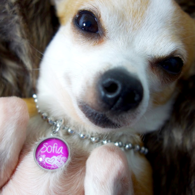 Adorable jewelry for dogs and dog lovers