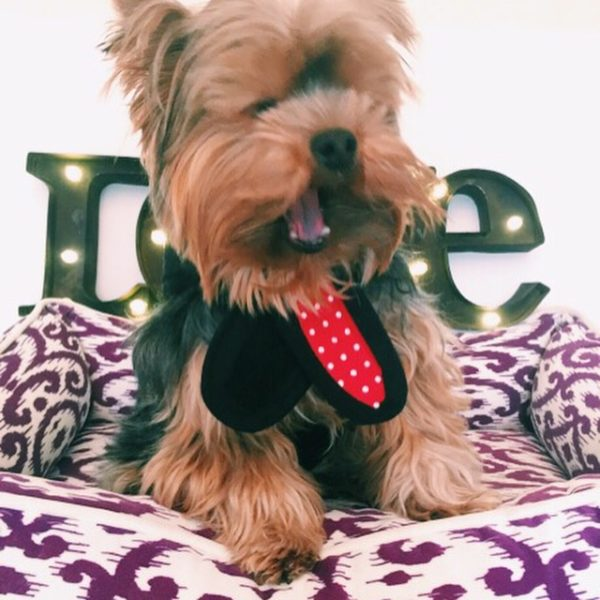 The stylish, designer small dog harness that calms your dog.