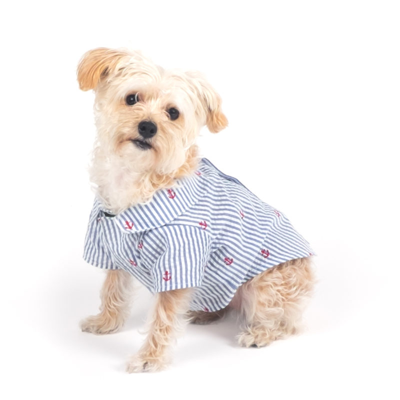 Want summer fashion ideas for your dog? Discover these adorable madras and seersucker dresses and shirts!