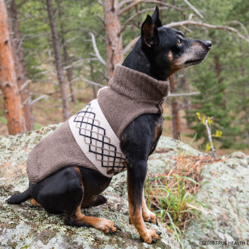 Dog fashion. Fall sweaters, eco-friendly from Bhutan.