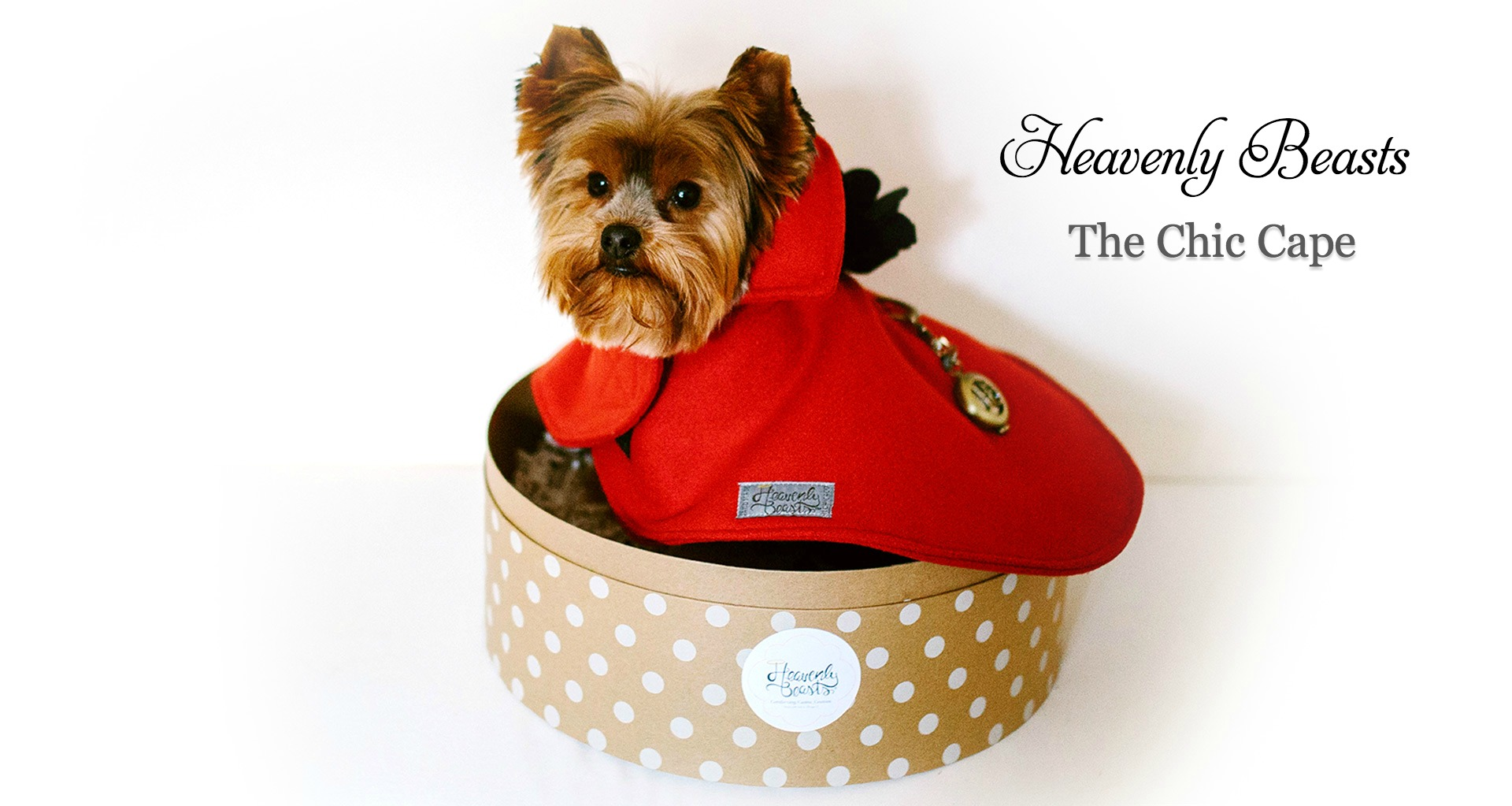 stylish dog fashion and more